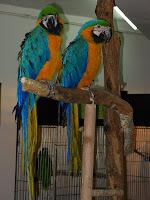 գազանանոց - թռչուններ