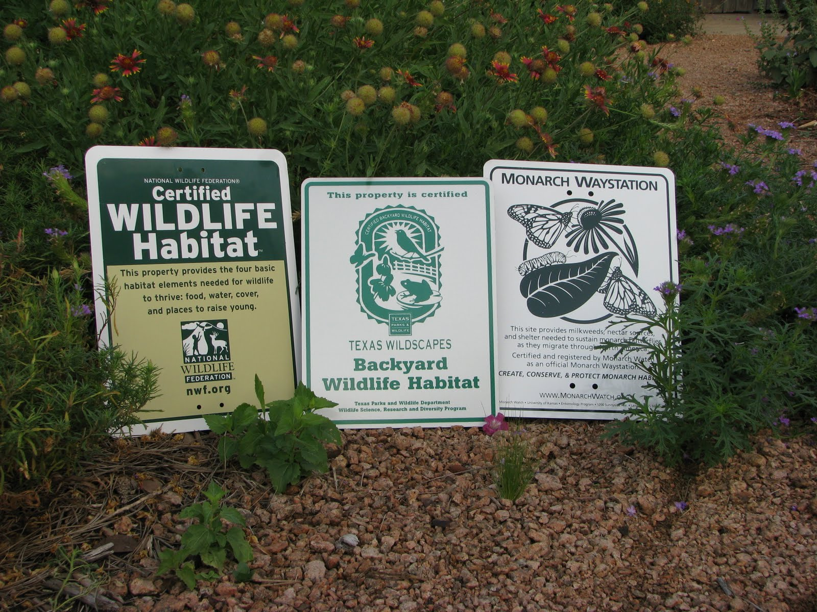 plano prairie garden monarch waystation certification