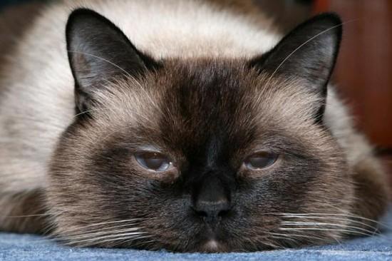 cat pics funny