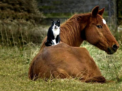 Unusual animal friendship pictures Seen On www.coolpicturegallery.net