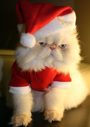 Animals as Santa Claus