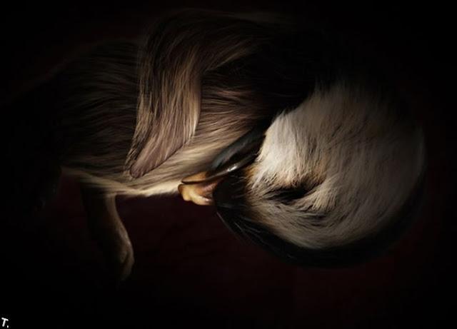 Fotos- Animais Extraordinários no Útero