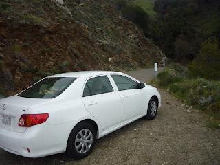 Toyota Corolla white