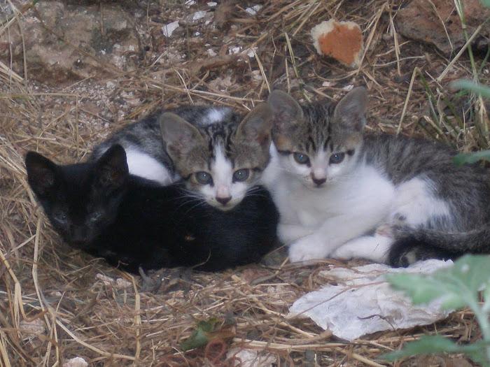 τα τρια γατακια στο σπιτι μας [ Μαχαιρα Ακαρνανιας ]