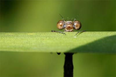 Fotografías de animales e insectos