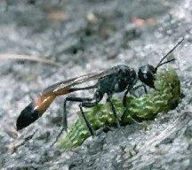 War On Wasps
