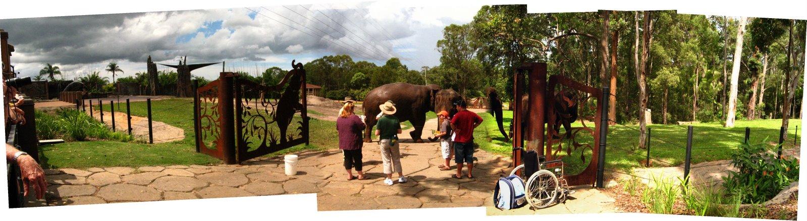 [Elephantasia1]