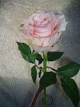 alla hjärtans ros