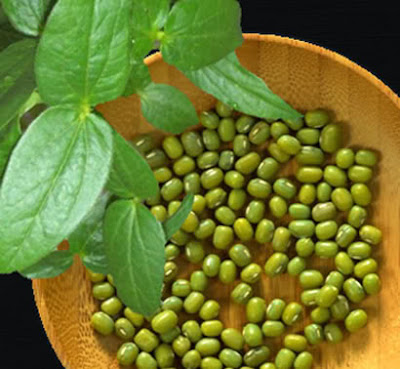 gambar kacang hijau, kacang hijau