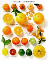 Types Of Citrus Fruits List