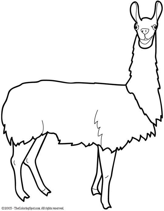 coloring pages llamas - photo#33