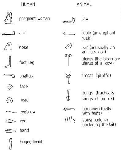 Related Pictures Egyptian Hieroglyphics For Kids Alphabet Funny