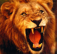 أسد - lion