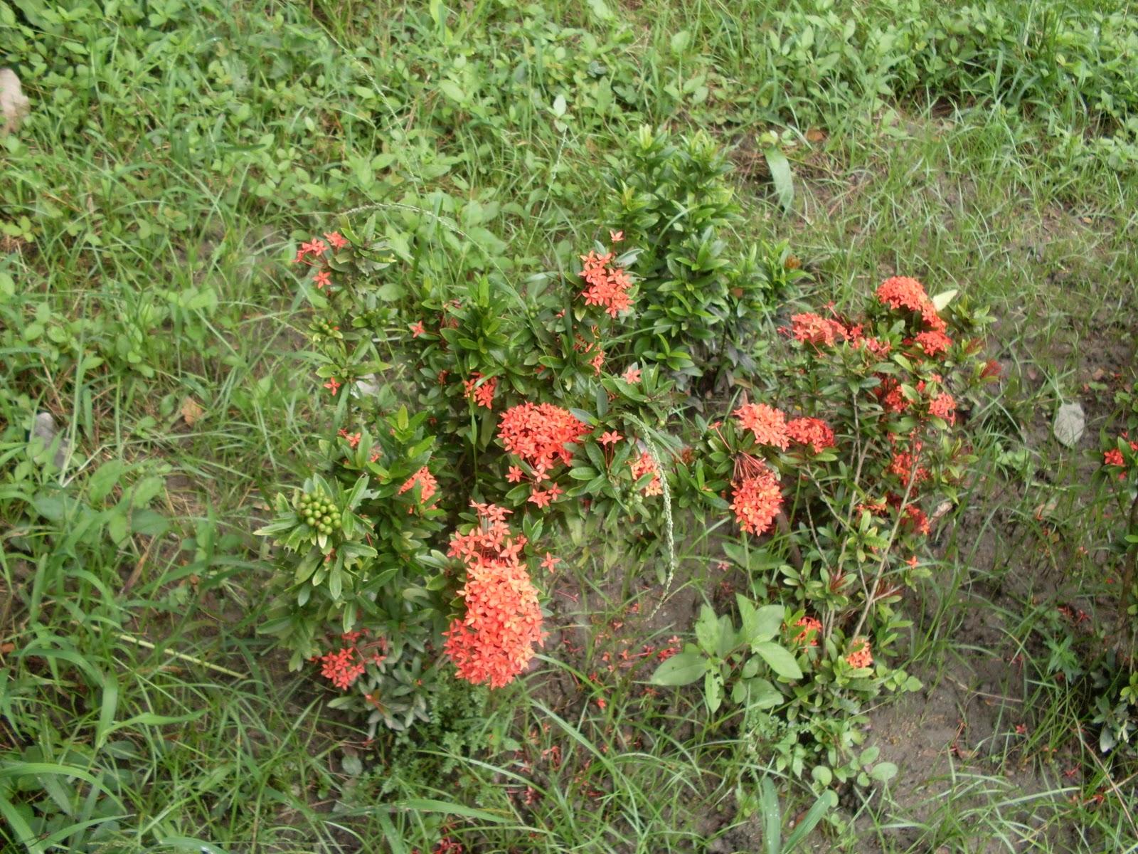 cristianziege plantas ornamentales