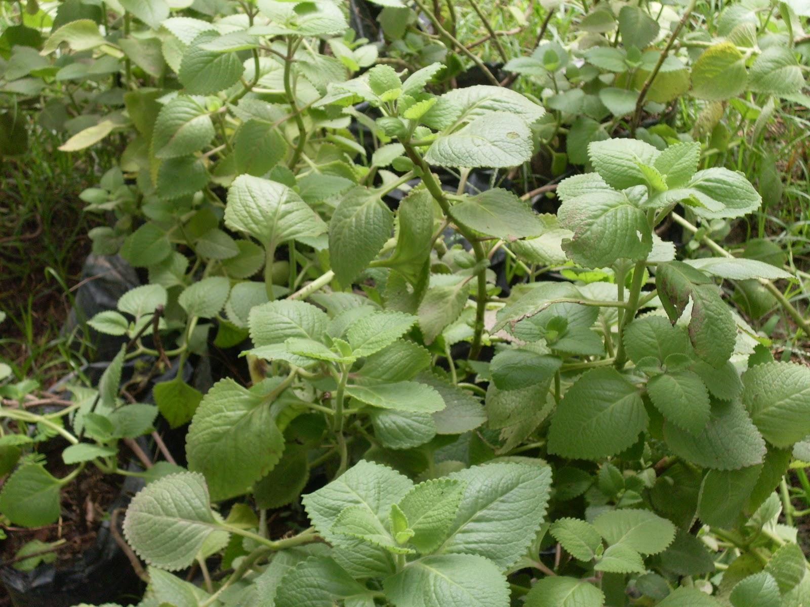 Plantas Ornamentales 2015 Personal Blog