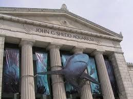 Secrets Of Mom Chicago Part 4 The Shedd Aquarium