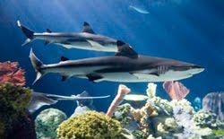 Shedd Aquarium Parking Fee