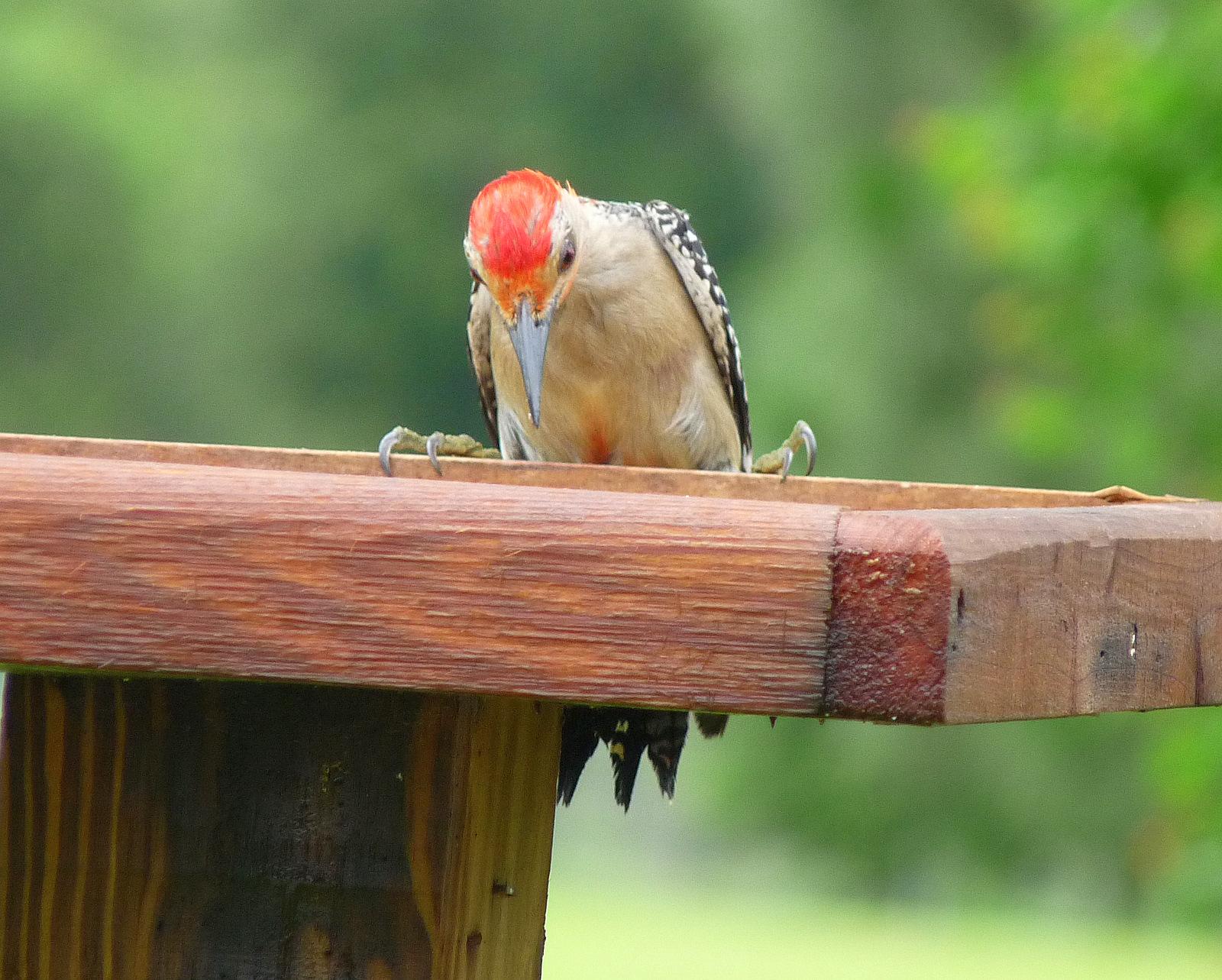 Consejos de alimentación para aves de invierno: Minnesota DNR