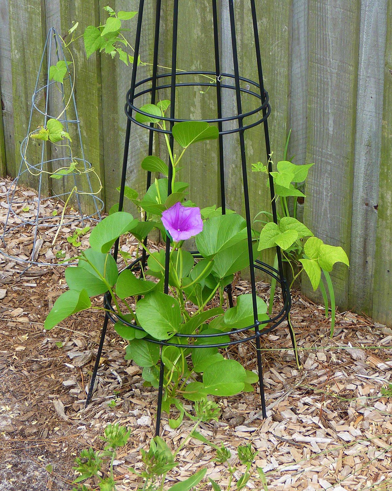 Backyard America Part - 27: My Florida Backyard - Blogger