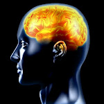 [ neuropsicologica.blogspot.com ]