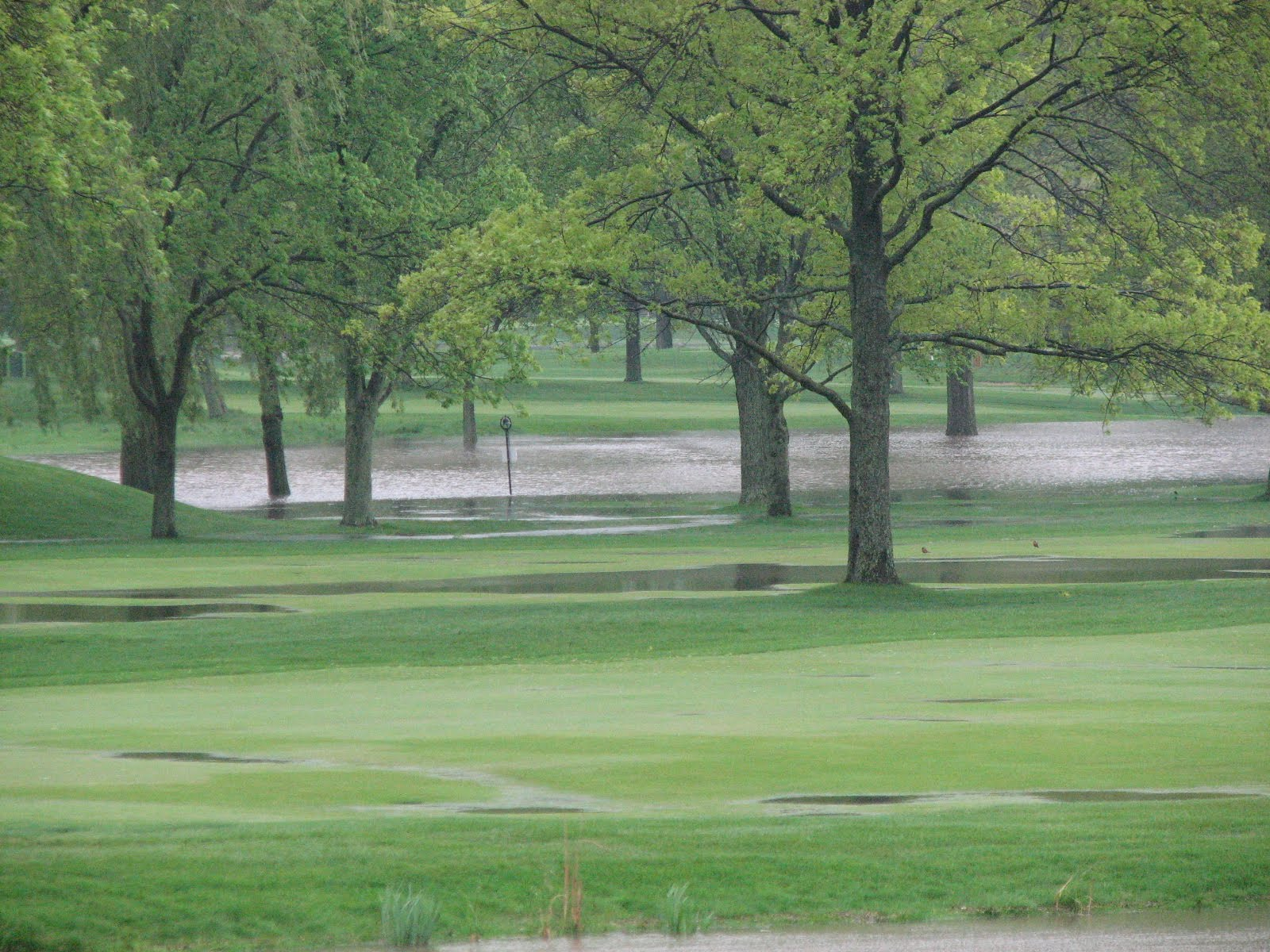 skokie country club golf course management when it rains it pour u0027s