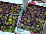 [2008] Figs