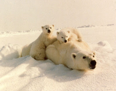 Image Result For Cubs Playing With