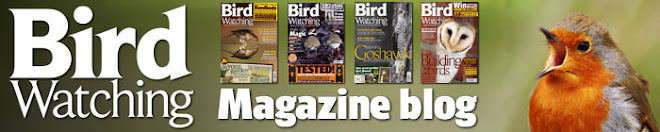 Birdwatching magazine blog