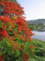 BARACOA NATURE
