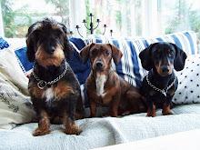 Våra tre pälshögar. Goliat, Speja och Dacke