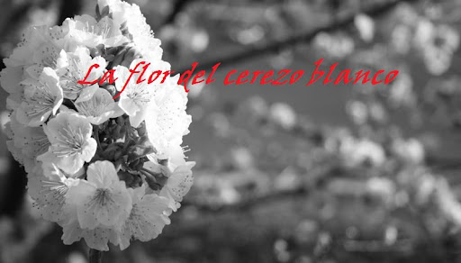 La flor del cerezo blanco