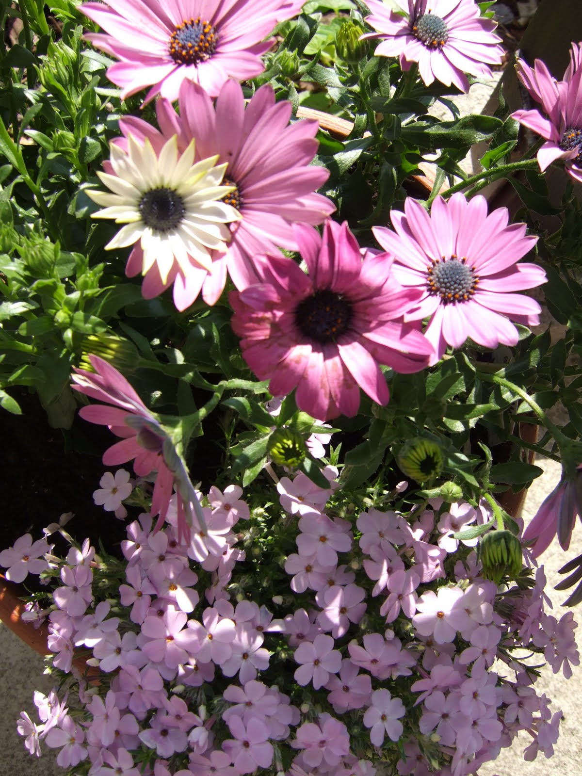Diane Kappa Steven Greimann We Must Cultivate Our Garden