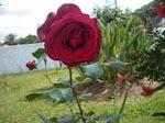 Mais uma prendinha florida, colorida e bem cheirosa, da Amiga Isabel - Artista Maldito -