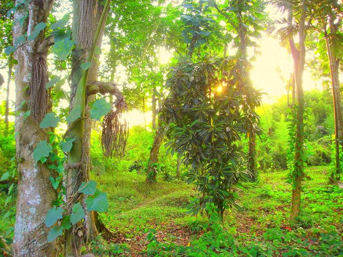 Matahari diantara dedaunan