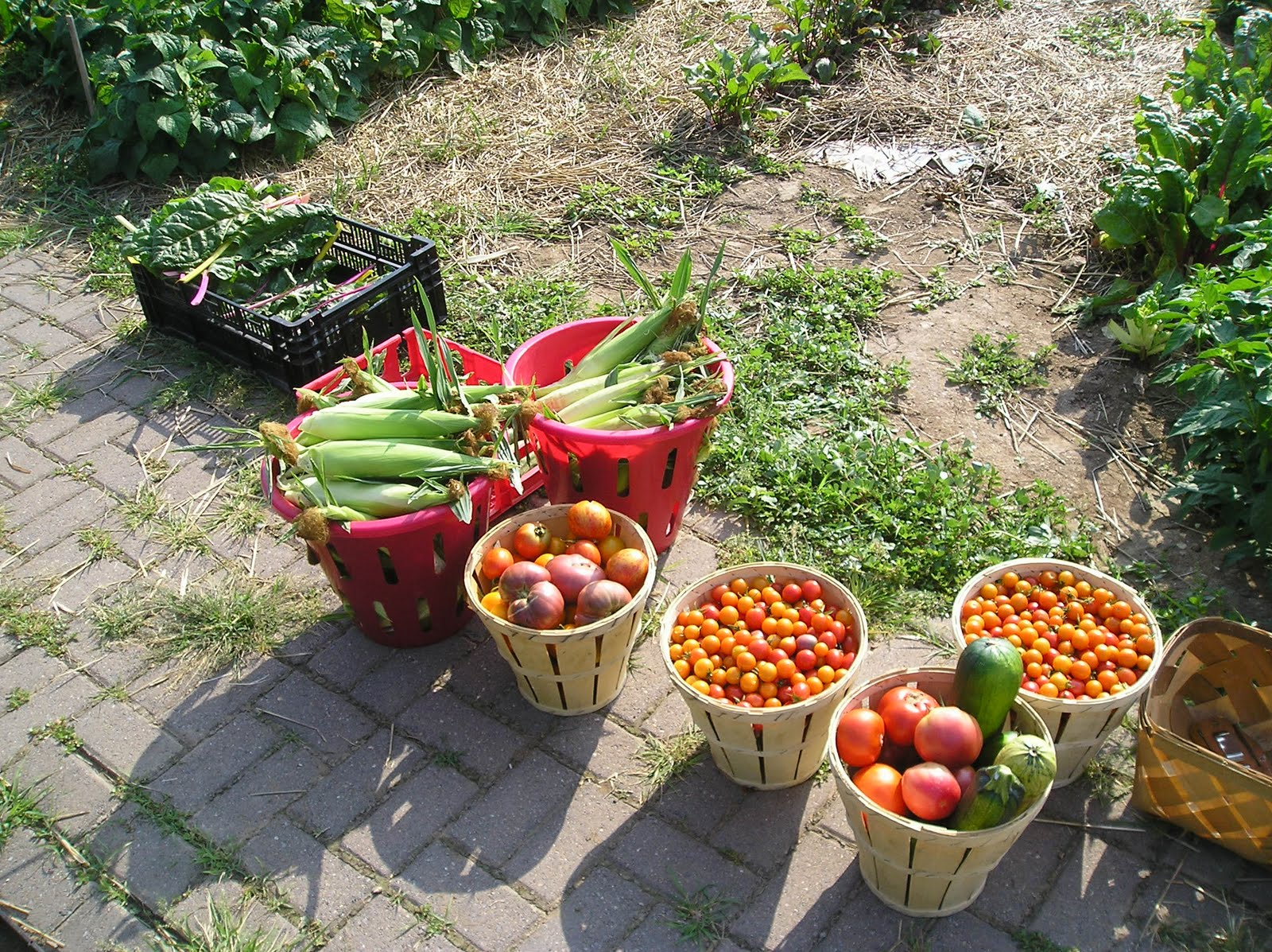 Franklin County PA Gardeners Victory Garden Harvest Time
