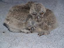 Pile of Young Ones