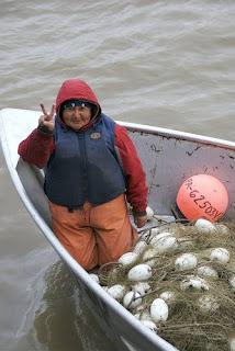 Progressive alaska salmon habitat quality questions in for Alaska fish counts