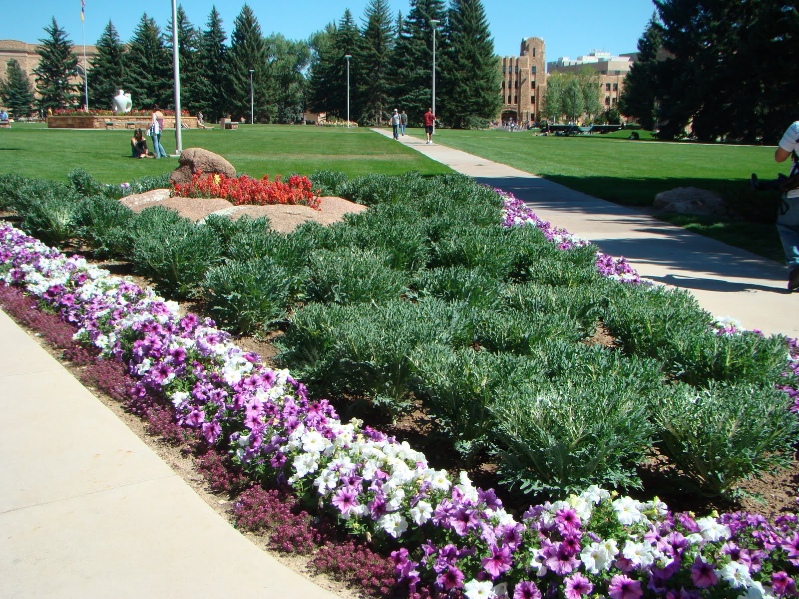 One week end in wyoming flowers at uw for Beautiful flower beds
