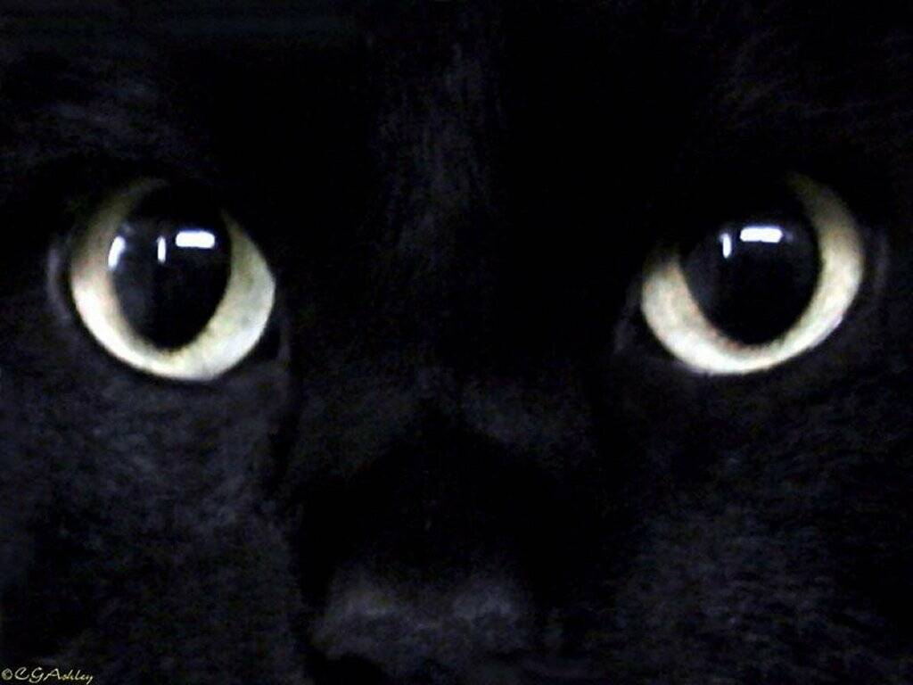 Black Cat Desktop