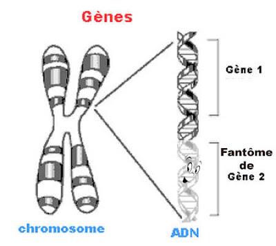 Gènes fantômes
