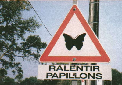Minute papillons attention