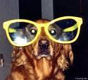 Chien lunettes
