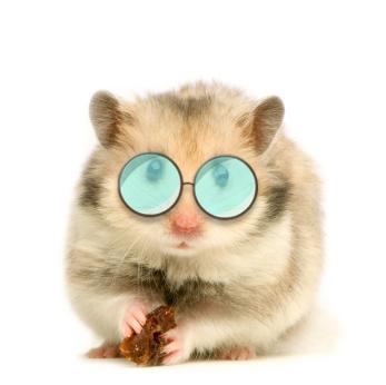 Hamster vampire