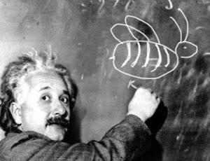 Einstein et les abeilles
