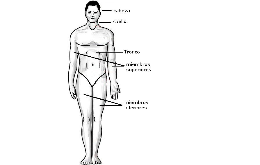 Biologíapuntocom: Regiones corporales