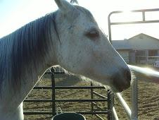 Pyper! Daysia's Horse!