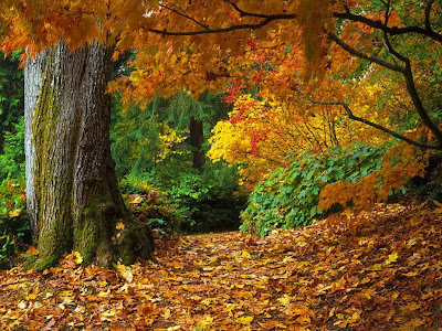 autumn wallpaper. autumn wallpapers. autumn