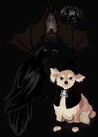 Cadılar Bayramı Hayvanları