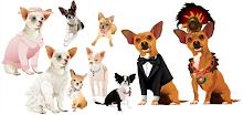 Chihuahua Doggie Shop