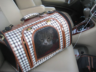 Squiggy in her carrier